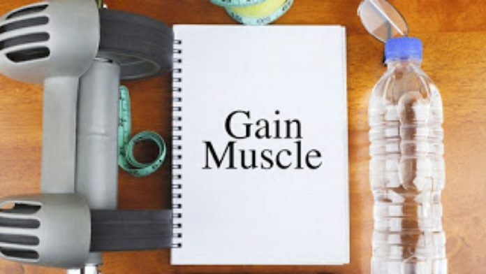 Muscle Gain, Muscle Building: The Steps to a Good Shape